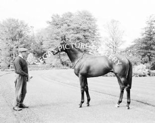 Sir Ivor with Lester Piggott (553-04)